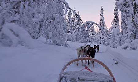 Husking sledding in Lapland