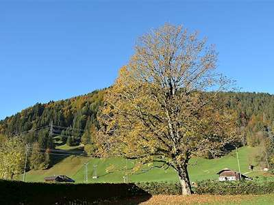 Oberland Nr. 11 Picture