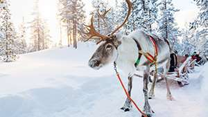 Introducing Lapland festive holidays